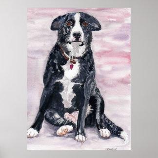 "Poster del ""perro negro"""