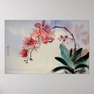 Poster del Phalaenopsis