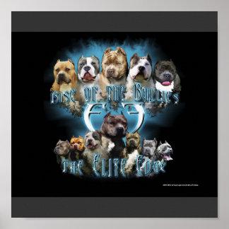 Poster del pitbull