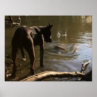 Poster del pitbull de Fishin