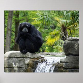 Poster del primate y de la cascada