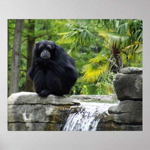 Poster del primate y de la cascada póster