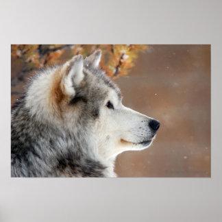 Poster del retrato del lobo