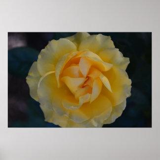 Poster del rosa amarillo