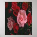 poster del rosado-rojo-rosa