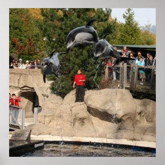 Poster del salto del delfín
