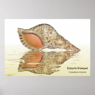 Poster del seashell de Tritón