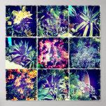 Poster del Succulent de Hipsta