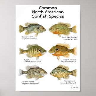 Poster del Sunfish