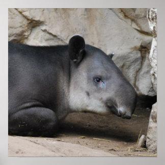 Poster del Tapir de Bairds