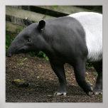 Poster del Tapir malayo