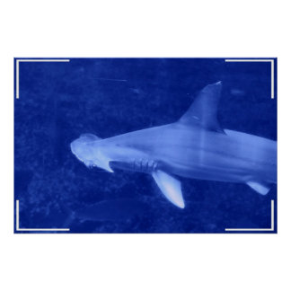 Poster del tiburón de Hammerhead