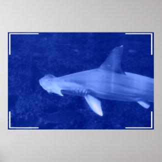Poster del tiburón de Hammerhead Póster