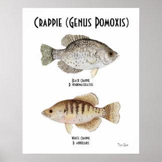 Poster del tipo de pez