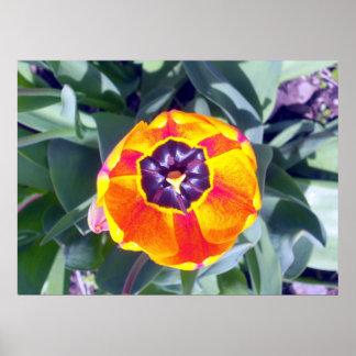 Poster del tulipán 1 de la taza de la flor