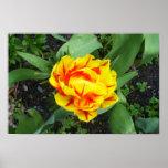 Poster del tulipán de Portmeirion