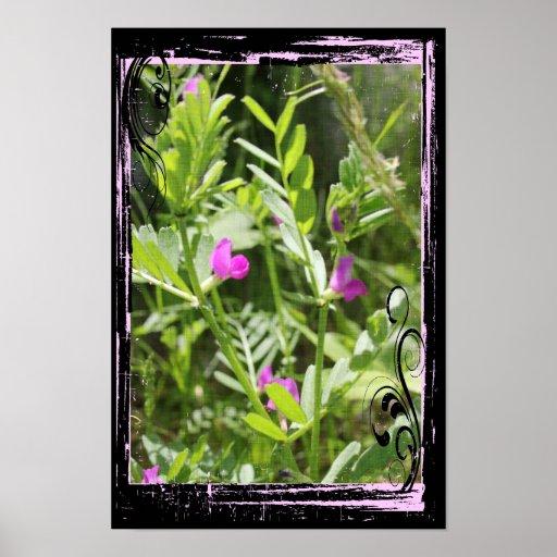 Poster del Wildflower de la arveja de primavera
