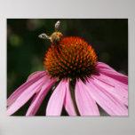 Poster del zumbido 10x8 de la abeja