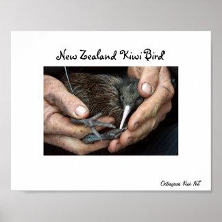 Poster disponible del pájaro del kiwi