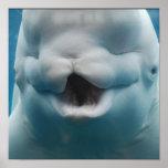 Poster divertido de la ballena de la beluga