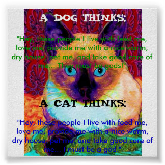 Poster divertido del gato
