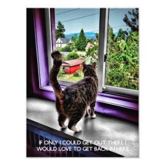 Poster divertido del gato fotografía