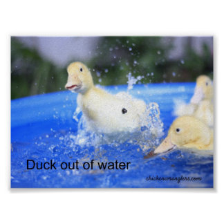 """Poster """"Duck out of water"""""""