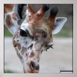 Poster dulce de la jirafa