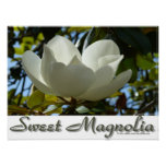 Poster dulce de la magnolia meridional