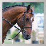 Poster dulce del caballo de Morgan