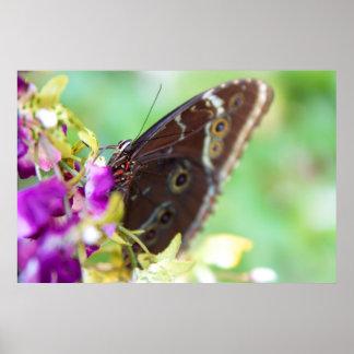 Poster dulce del néctar