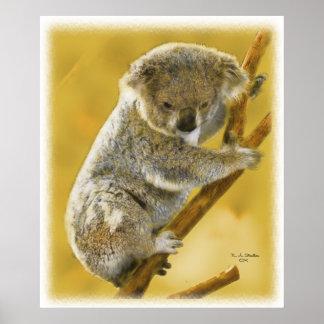 ¡… Poster e impresión lindos del oso de koala…!