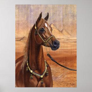Poster egipcio del caballo de princesa Arabian TOD