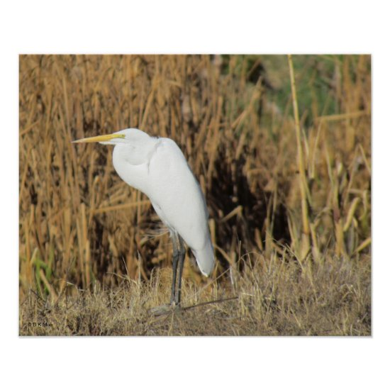 Poster - Egret in Grass