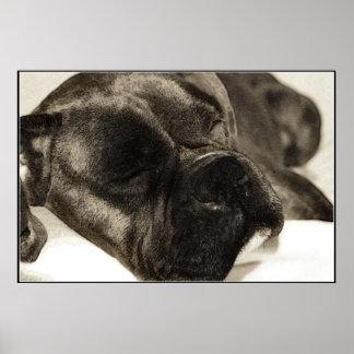 Poster el dormir del boxeador