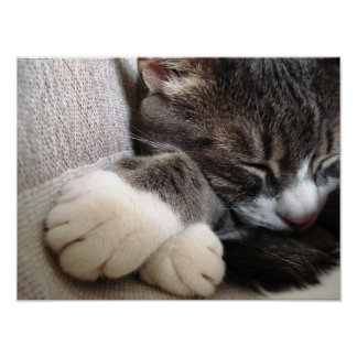Poster el dormir del gato póster