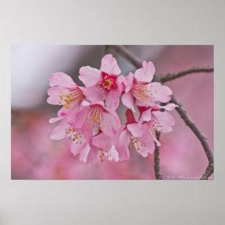 Poster en colores pastel rosado del ramo de la flo