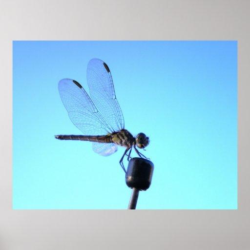 Poster encaramado libélula
