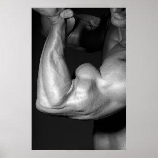 Poster ENORME del bíceps