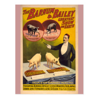 Poster entrenado del circo de los cerdos postal