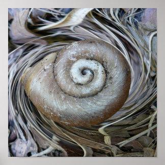 Poster espiral de Shell