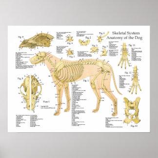 """Poster esquelético 18"""" de la anatomía del perro X"""