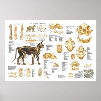 """Poster esquelético felino 24"""" de la anatomía del g"""