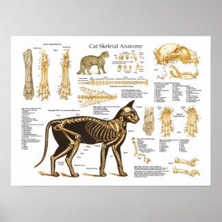 Poster esquelético felino de la anatomía del gato
