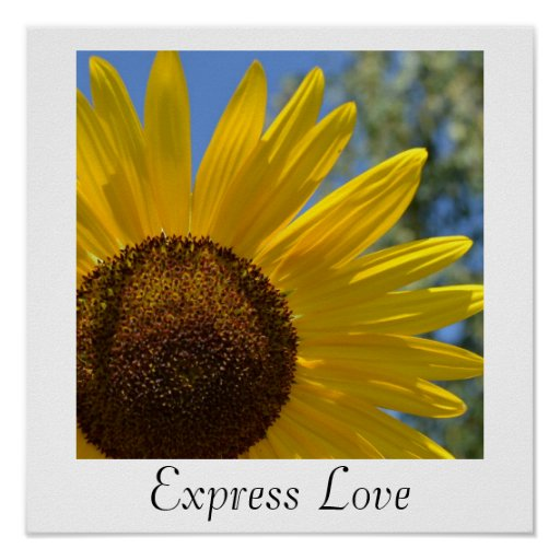 Poster expreso del girasol del amor