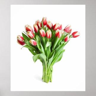 Poster exquisito de las flores - tulipanes
