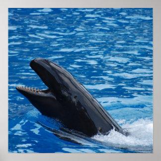 Poster falso de la orca