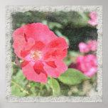 Poster floral color de rosa pintado del jardín