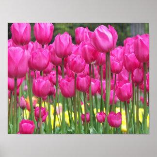 Poster floral de los tulipanes rosados póster