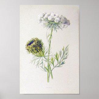 Poster floral del vintage